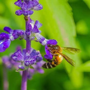 Types of Bees Working in Your Garden