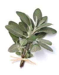 Salvia Small Talk: Infusing Your Car with Sage