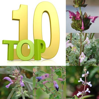 Praise for Top 10 Lesser-Known Drought-Resistant Salvias