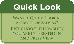 New at FBTS: Take a Peek at 'Quick Look'