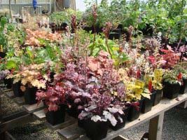 Timing plants for sale