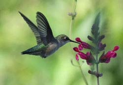 Ten Favorite Flowers for Butterflies and Hummingbirds